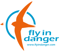Fly in danger